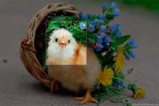 Crop image with Marquee tool in Javascript